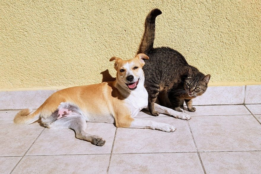 Sharing Housing with Pets